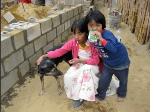 Guatemalan dog