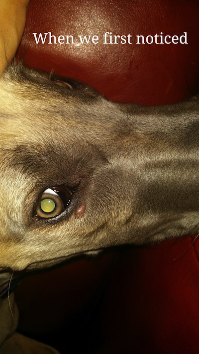 lump beneath dog's eye
