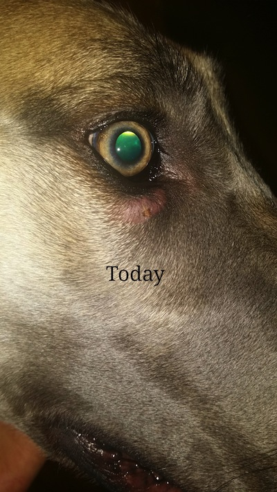 lump under dog's eye