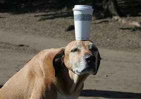Is coffee bad for dogs?