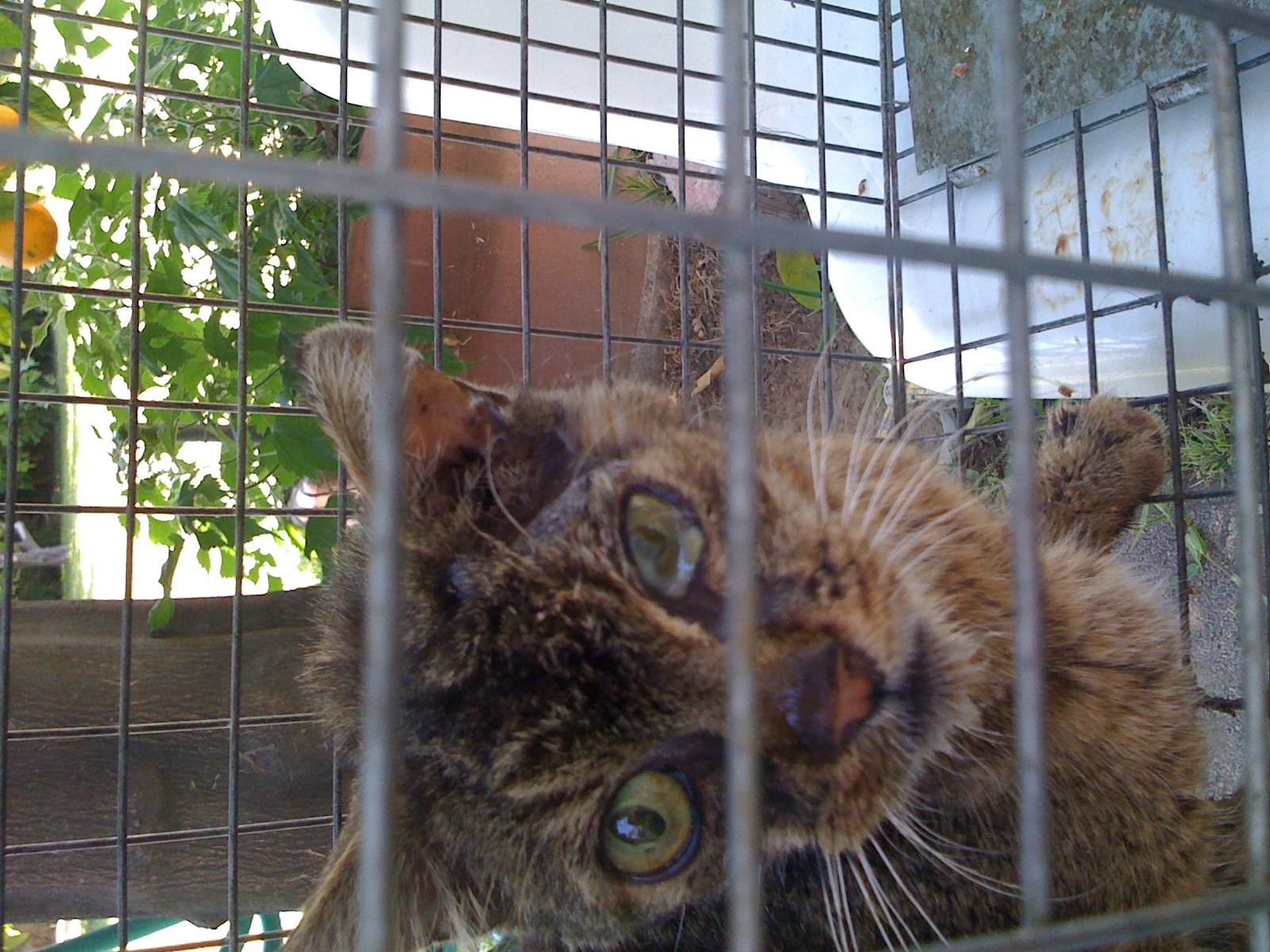 feral cat skin problem