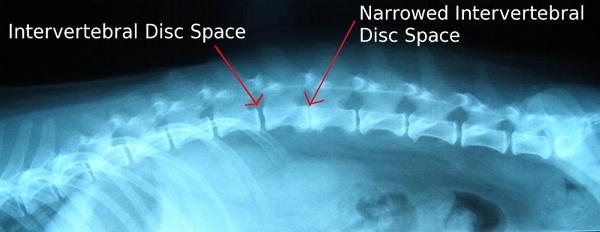 canine osteosarcoma