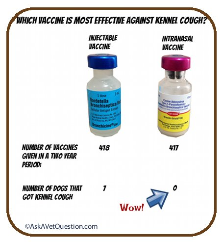 comparison of intranasal and injectable kennel cough vaccines