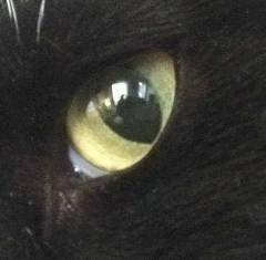 spot on cat's eye