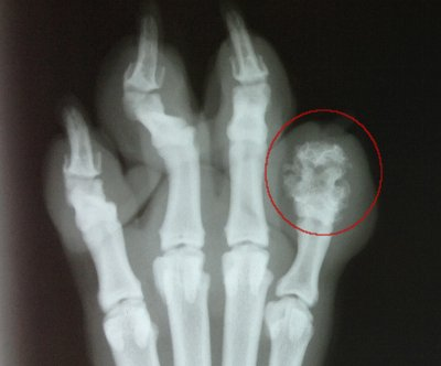 toe xray on a dog