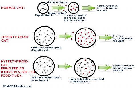 how does yd work in treating hyperthyroidism?