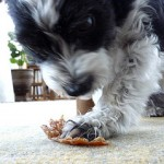 dog eating chicken jerky