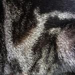 Cat fur coats